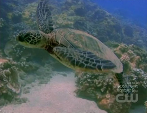 Antm13_10_turtle