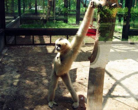 Monkey_werk