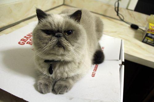 Winston_pizza2