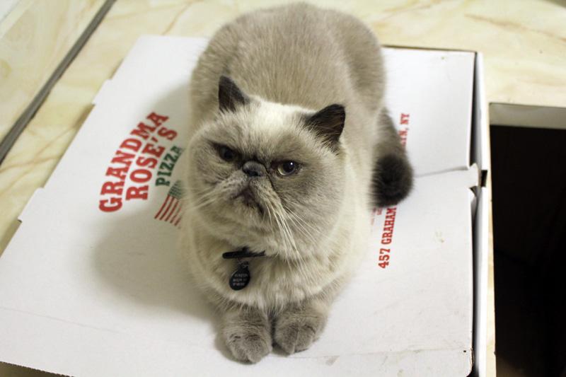 Winston_pizza