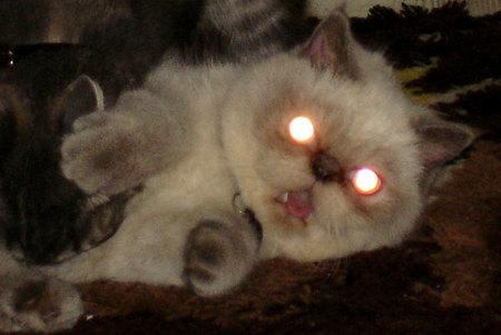 Gloworm2