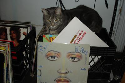 Housecat1