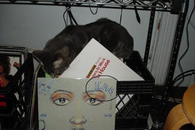 Housecat4