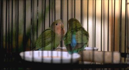 Nes2birds
