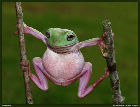 Vagina_frog