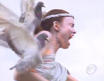 Pigeons_nicole